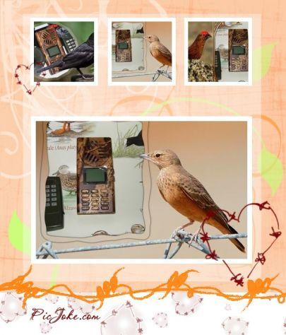 RICHIAMO PER UCCELLI MP3 CON TELECOMANDO - Foto 2