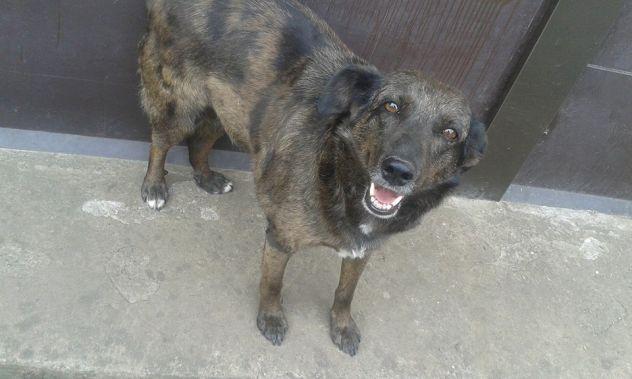 DIANA, doce cagnolina cerca casa URGENTEEE - Foto 2