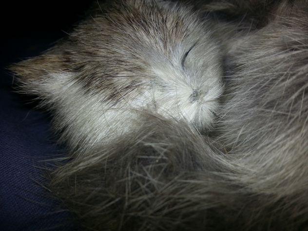 Gatto soprammobile - Foto 5